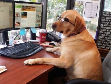 Dos and Don'ts for Taking your Dog to Work