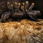 2011 Wildlife Photographer of the Year Winners at the Royal BC Museum