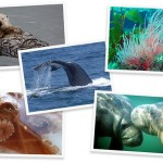 U.S. Initiates First National Network to Monitor Marine Biodiversity