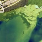 Geomatics Data Solutions Fills Bathymetric LIDAR Gap with CHIROPTERA II