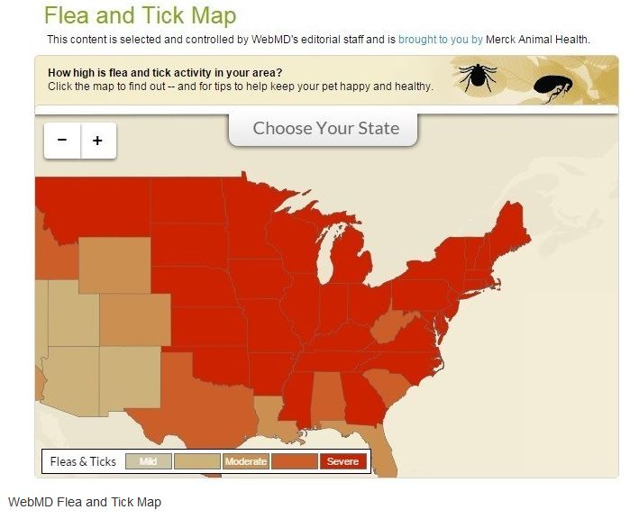 Interactive Map Displays US Flea And Tick Activity In Real Time - Tick us map