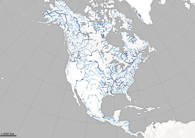 A Satellite View of River Width (Image: NASA)