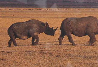 Project to Protect Rhino by Tracking People
