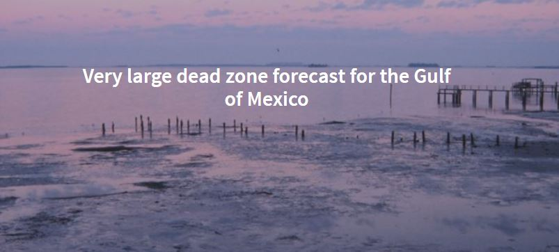 Very large dead zone forecast for the Gulf of Mexico