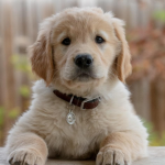 What You Need to Know Before Getting Your First Puppy